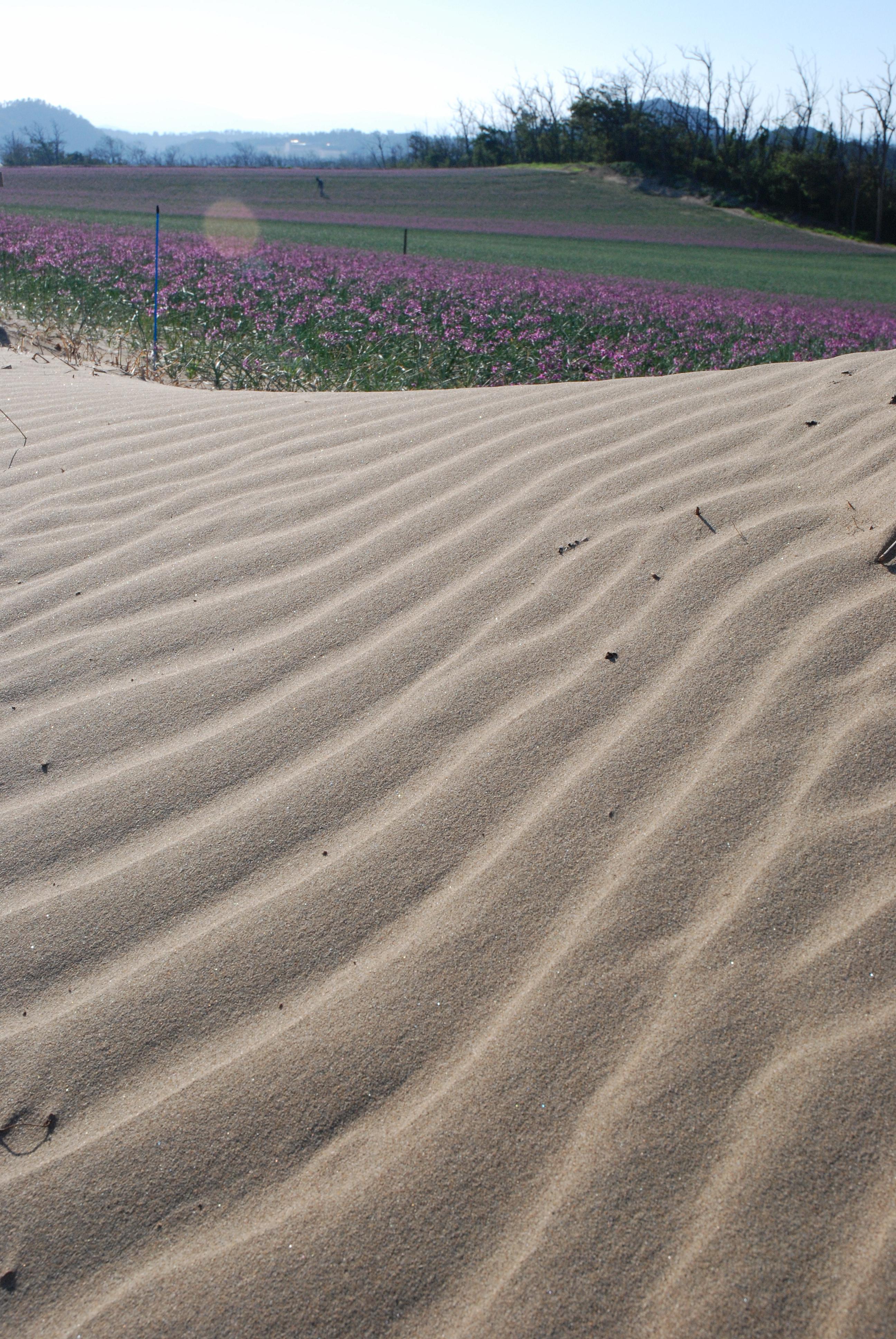 tottori sand dunes sanin coast geopark