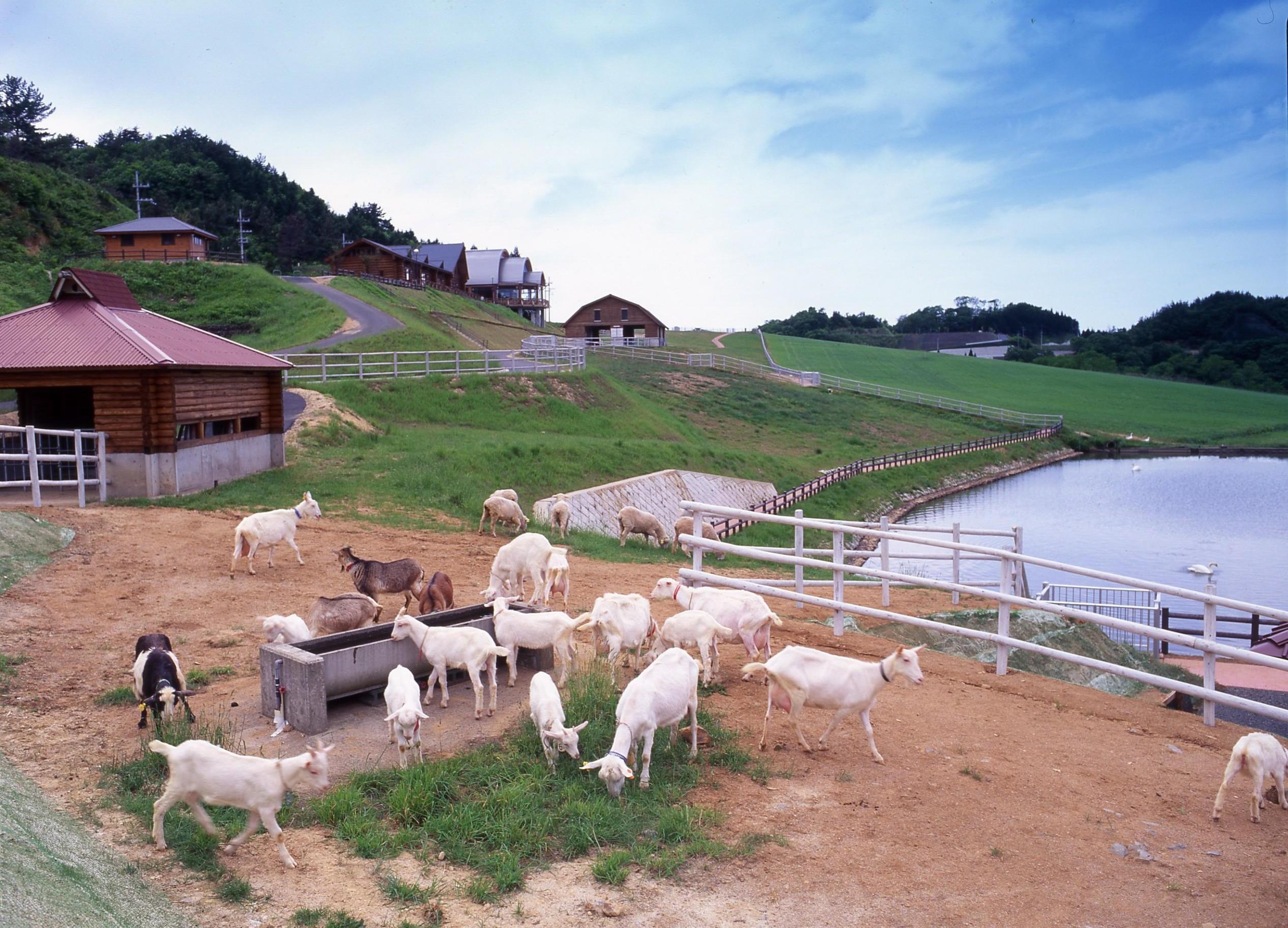 碇高原牧場