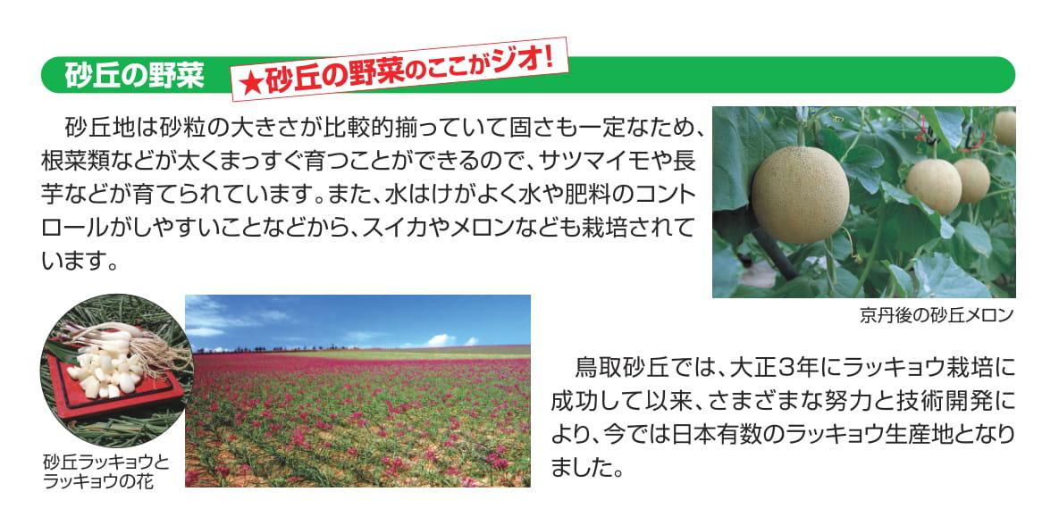 砂丘の野菜のここがジオ