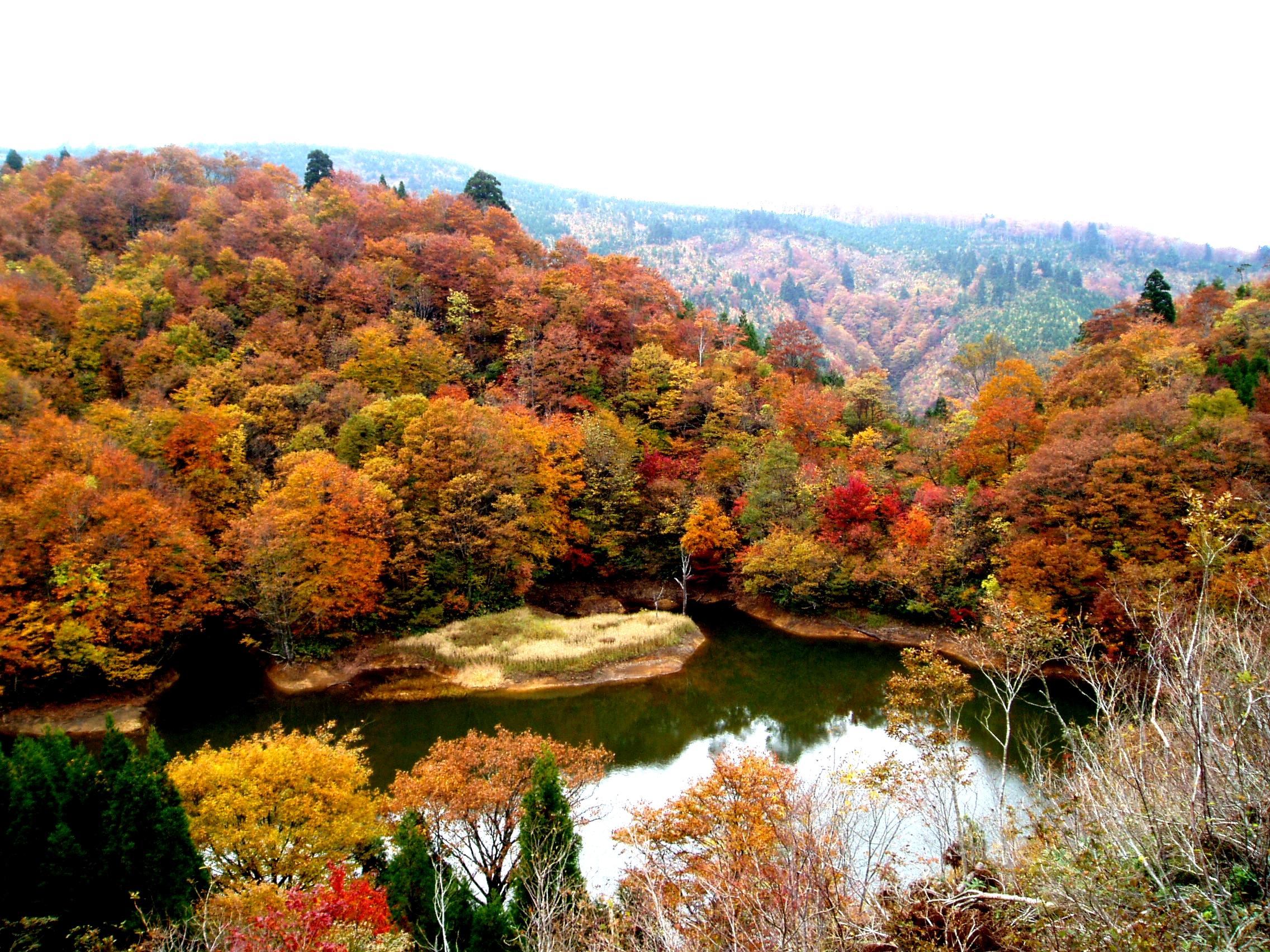 上山高原(ショウブ池)